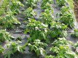 Циновка PP Weed для травы растет управление