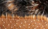 ハイエンドジャカード模造アライグマの毛皮