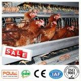 Клетки цыпленка для бройлера и слой в доме цыплятины с конструкцией фермы