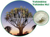 Extrato natural de casca Yohimbe Yohimbine Hci 8% ~ 98%