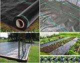 PP tejida cubierta de tierra / Horticultura Textil / Tela Paisaje Proveedor Profesional