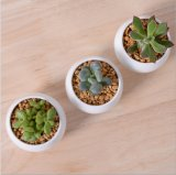 創造的なミニチュア正方形の白い陶磁器の植木鉢