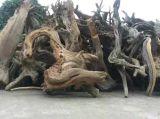 Taihang山からの自然な香のThujaの粉