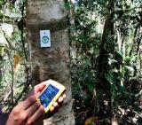 für Baum/das Protokollieren/das hölzerne Kennzeichen-Anlagegut, das NFC RFID Chip-Nagel-Marken aufspürt