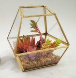 꽃 화분에 심는 Succulent가 최신 판매 인공적인 모형 유리에 의하여 설치한다