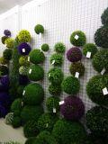 Gu95156446의 회양목의 베스트셀러 인공적인 플랜트 그리고 꽃