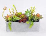 Succulent misturado bonito no potenciômetro do cimento para a decoração