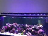 Luz inteligente marinha do aquário do diodo emissor de luz do projeto novo para o crescimento coral