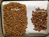 Сортировщица цвета грецких орехов новой модели с системой полного цвета 5000+Px