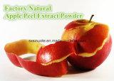 공장 자연적인 Apple 껍질 추출 분말