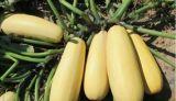 Самая лучшая ранг a/AA стерженей семян тыквы