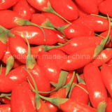 Bagas orgânicas chinesas de Goji (Wolfberry)