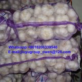 Shandong 최상 신선한 일반적인 백색 마늘