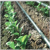 Wasser-Einsparung-Plastikberieselung-Band für landwirtschaftliche Bewässerung