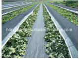 [ويد] عالقة قماش, أرض غطاء يحاك بناء, معمل زراعيّة مضادّة جذر [ويد] حصير