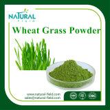 Weizen-Gras-Puder für verlieren Gewicht