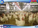 Aves de corral de acero galvanizadas vertidas/casa de pollo para la venta al por mayor (SSW-H-007)
