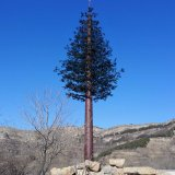 カムフラージュファブリック松の木のテレコミュニケーションポーランド人かタワー