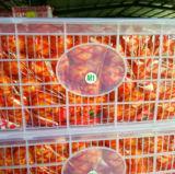 O mandarino doce pequeno do bebê de Nanfeng da colheita 2016 nova