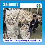 きのこのための太陽温室をカバーする中国の製造者のシェーディング