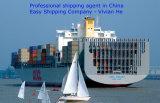 Cargadoor/Forwarder/Logistiek/Makelaar/Vracht van China aan de Eilanden van de Atlantische Oceaan