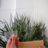 100%年のバージンPMMAのアクリルガラス