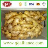 2017 de bonne qualité gingembre frais chinois