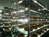 100W Atex에 의하여 증명되는 LED 폭발 방지 빛