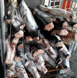 Tiefkühlkost-blauer Haifisch Hgt