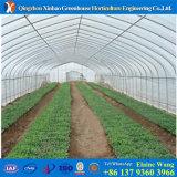Invernadero de Invernadero del túnel del bajo costo para la venta Economico