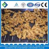 중국 고품질 신선한 생강 250g는 2016년을 올린다