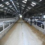 L'industria d'alimentazione della mucca struttura d'acciaio si è liberata di con il disegno moderno