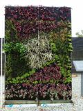 Piante artificiali di alta qualità della parete verticale Gu-Mx-Green-Wall0011