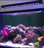 Lumière marine programmable d'aquarium du récif coralien DEL de 4 glissières