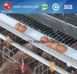 Maison de poulet au poulet pour le poulet