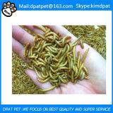Larvas de farinha secadas para a venda