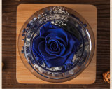 Бутылки желания Ivenran цветки светящей свежие для творческого подарка дня Valentine дня рождения