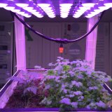 Eficiência de utilização de luz superior cresce luz