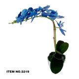 Flor verdadera superventas de la orquídea del tacto