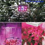 LED de espectro cheio de 1000W cresce a luz para plantas de interior Veg e flor, luzes de crescimento de plantas hidropônicas de estufa de jardim (12-band 10W / LED)