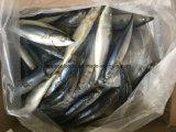 De Chinese Ingeblikte Bevroren Vreedzame Makreel van de Makreel Fabriek