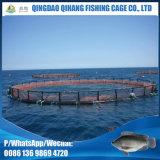 Gaiola comercial da piscicultura do Tilapia de Marketsize