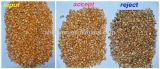 Vsee RGB Machineg 가공 식품 옥수수 색깔 분류하는 사람 곡물 분리기