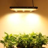 O diodo emissor de luz cresce o diodo emissor de luz cheio claro do espetro não cresce claro nenhum ventilador