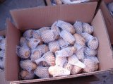 Neues Crop Fresh Potato in Carton/in Top Quality