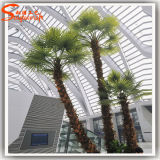 Palm artificiale Tree per Indoor Decoration