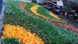 Piante di alta qualità e fiori artificiali del giardino verticale Gu-Mx2091347