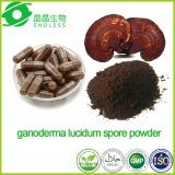 Medicina Tradicional China de polisacáridos Ganoderma lucidum