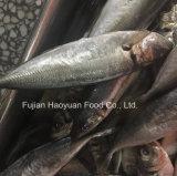 يجمّد كبير عين شذر السمكة