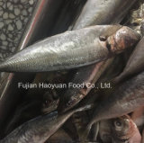 Gefrorener grosser AugeScad der Fische